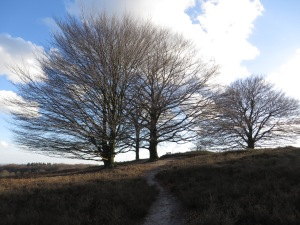 Drie kale bomen Posbank